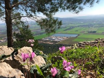 רקפות צופות על עמק יזרעאל
